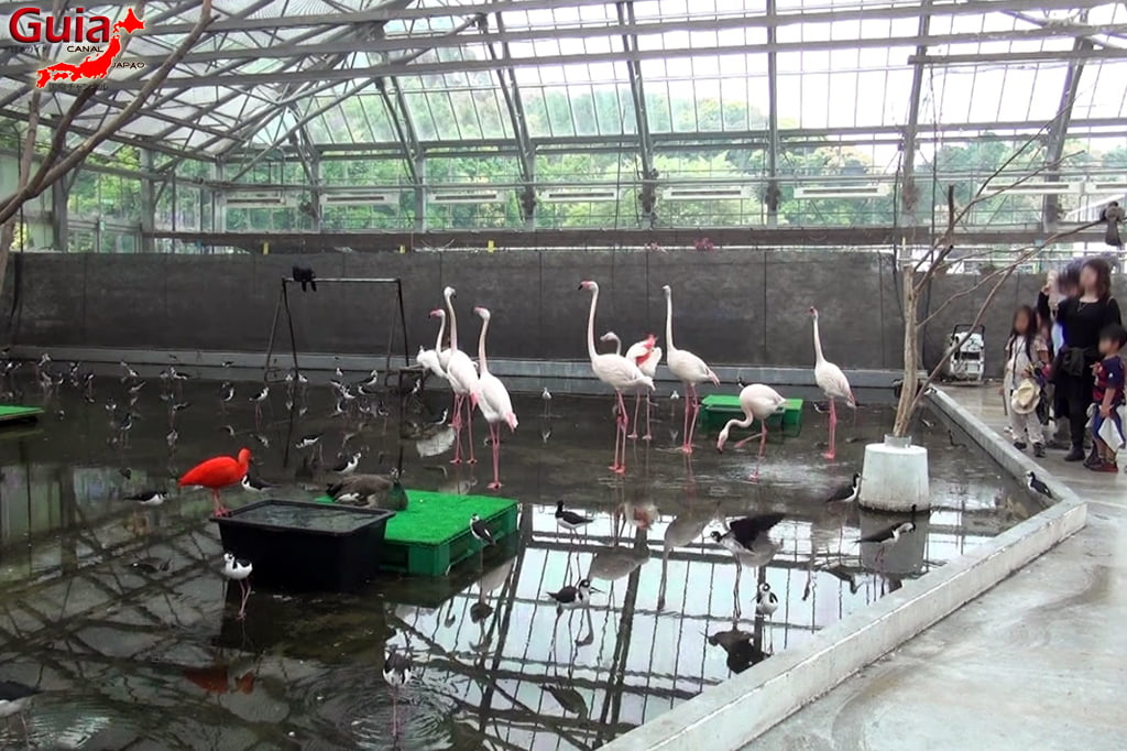 Parque dos pássaros e flores - Kakegawa Kachouen (掛 川 花鳥 園) 24