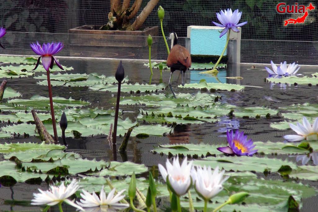 Parque dos pássaros e flores - Kakegawa Kachouen (掛 川 花鳥 園) 26