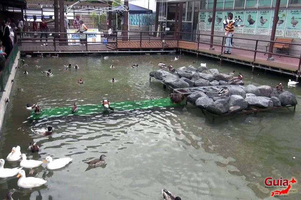 Parque dos pássaros e flores - Kakegawa Kachouen (掛 川 花鳥 園) 32