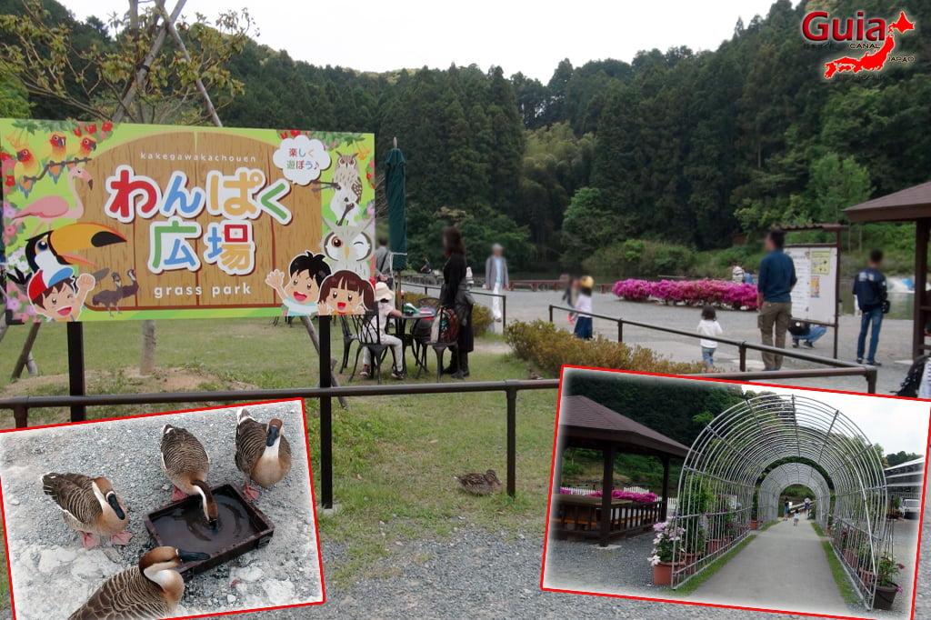 Parque dos pássaros e flores - Kakegawa Kachouen (掛 川 花鳥 園) 38
