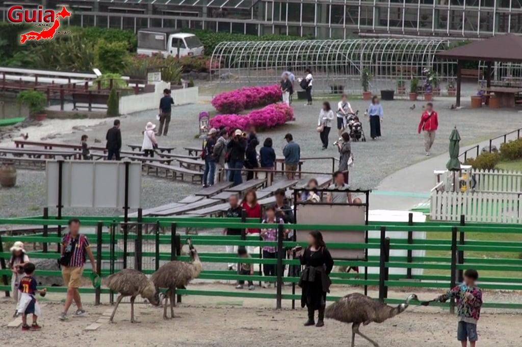 Parque dos pássaros e flores - Kakegawa Kachouen (掛 川 花鳥 園) 39