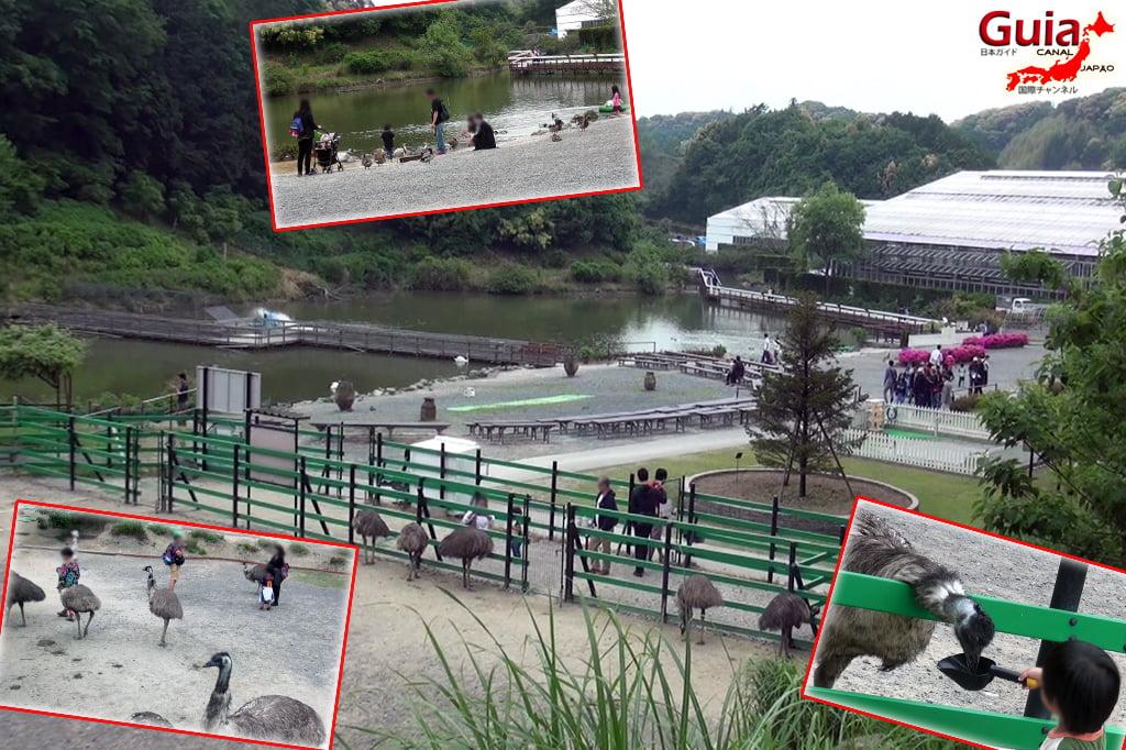 Parque dos pássaros e flores - Kakegawa Kachouen (掛 川 花鳥 園) 40