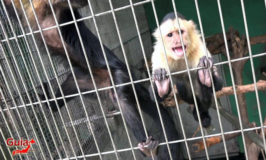 Парк японских обезьян - Парк обезьян 8