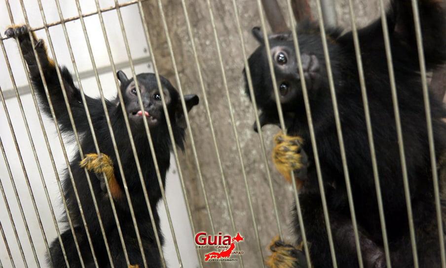 Парк японских обезьян - Парк обезьян 10