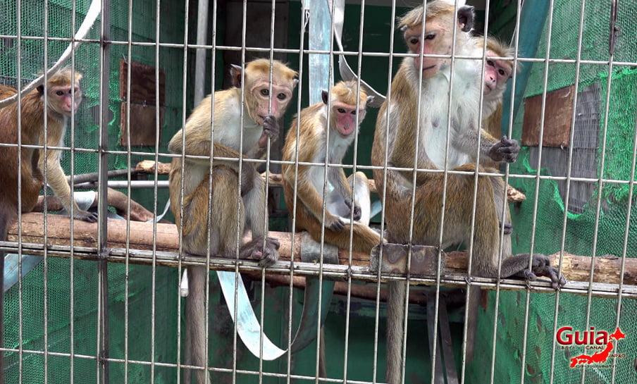 Парк японских обезьян - Парк обезьян 11