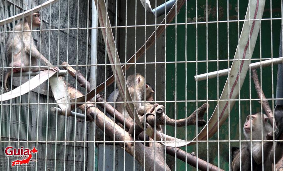 Парк японских обезьян - Парк обезьян 12