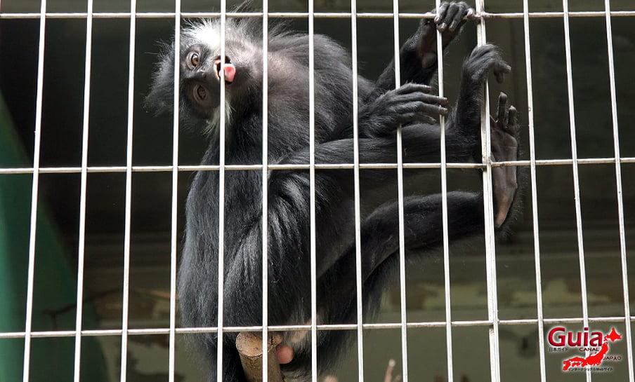 Парк японских обезьян - Парк обезьян 13