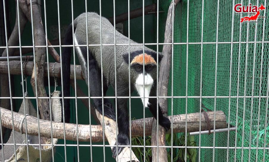 Парк японских обезьян - Парк обезьян 15