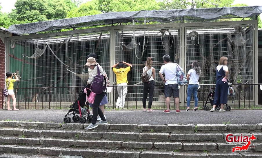 Парк японских обезьян - Парк обезьян 16