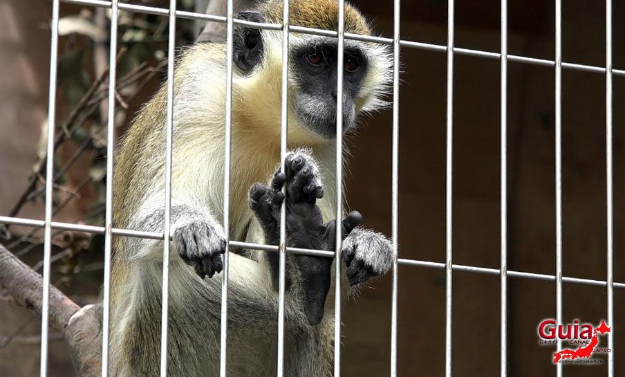 Парк японских обезьян - Парк обезьян 17
