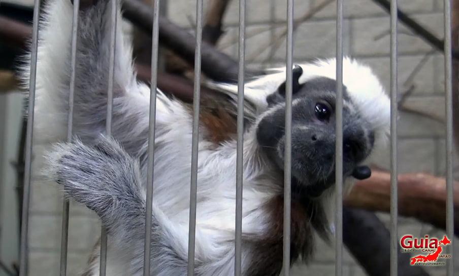 Парк японских обезьян - Парк обезьян 21