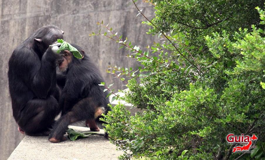 Парк японских обезьян - Парк обезьян 25