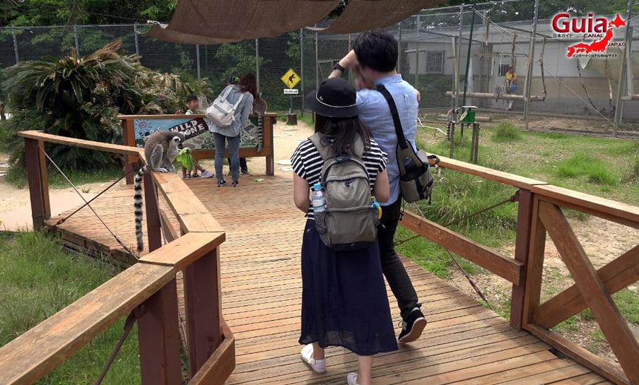 Парк японских обезьян - Парк обезьян 28