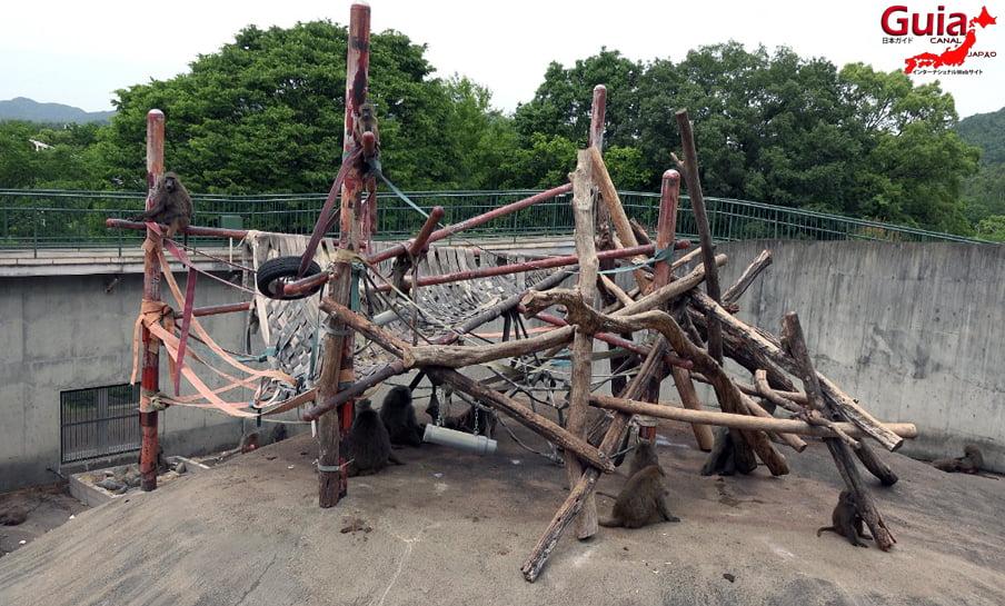 Парк японских обезьян - Парк обезьян 34