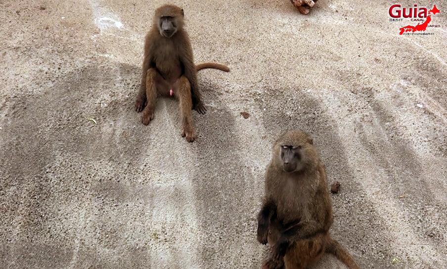Парк японских обезьян - Парк обезьян 35