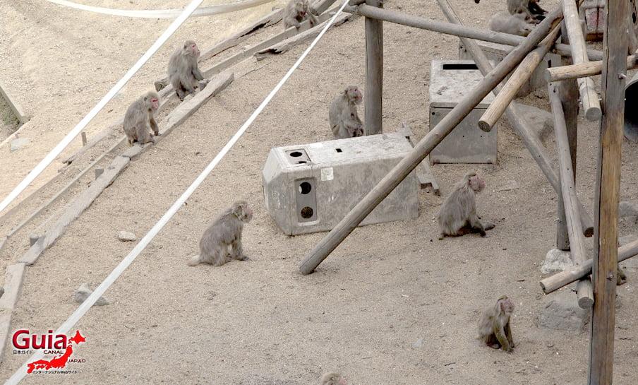 Парк японских обезьян - Парк обезьян 39