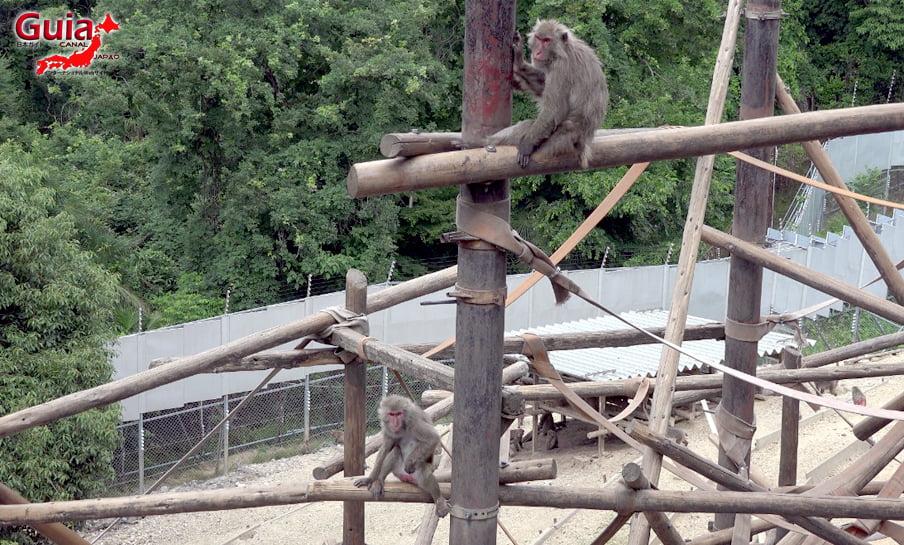 Парк японских обезьян - Парк обезьян 41