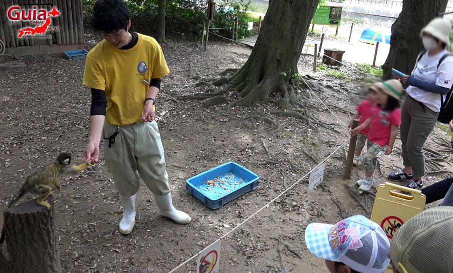 Парк японских обезьян - Парк обезьян 43