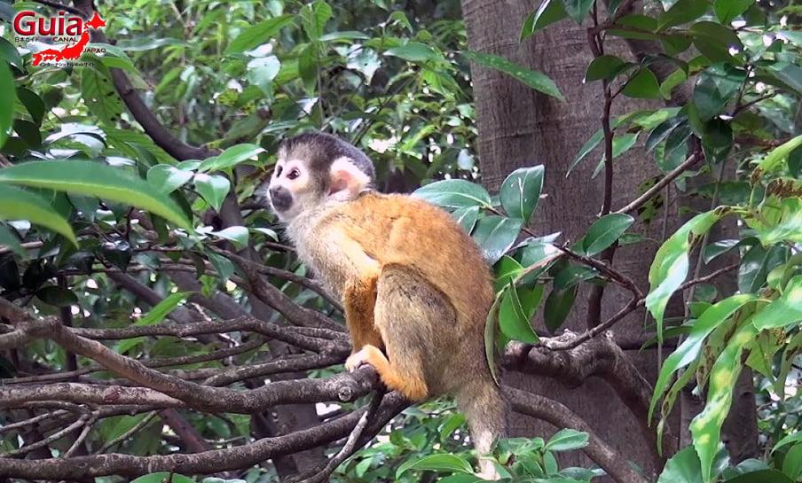 Парк японских обезьян - Парк обезьян 44