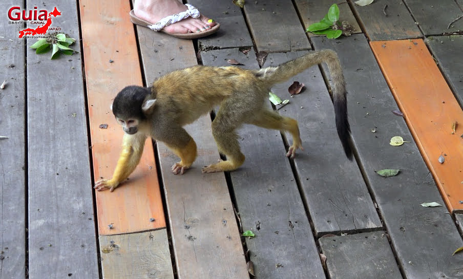 Парк японских обезьян - Парк обезьян 45