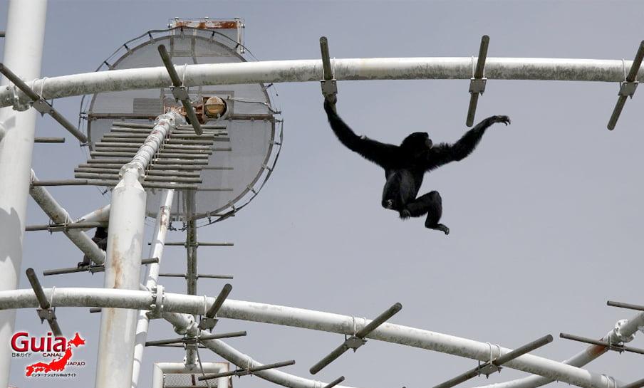 Парк японских обезьян - Парк обезьян 47