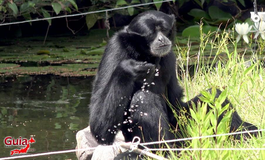 Парк японских обезьян - Парк обезьян 48