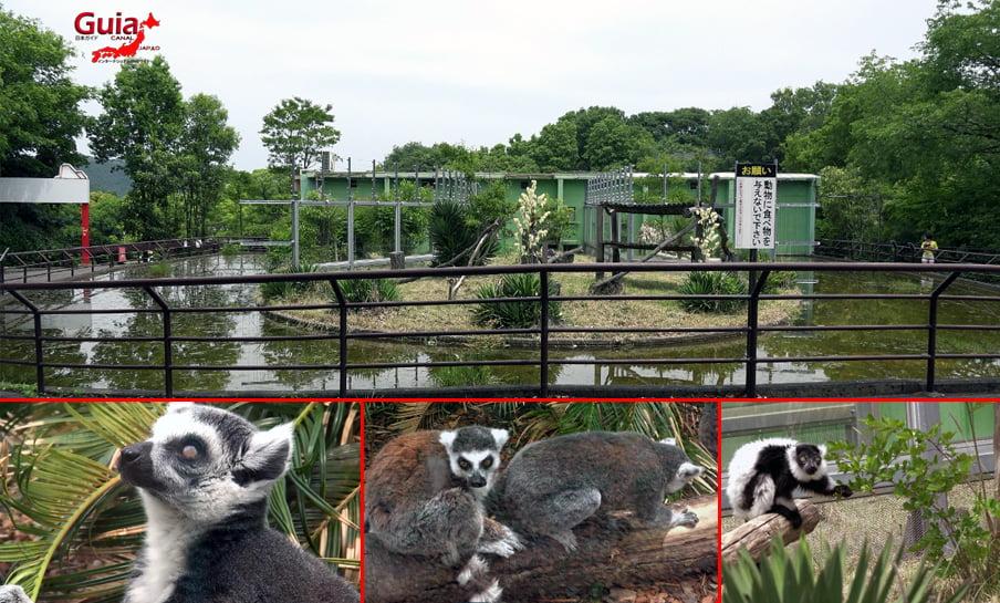 Парк японских обезьян - Парк обезьян 5