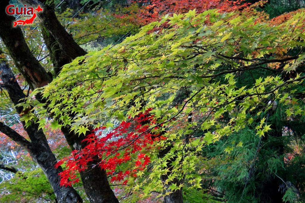 Park Korankei (香 嵐 渓) Toyota 19 Musim Gugur Daun