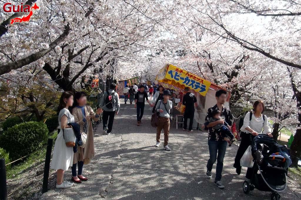 Okazaki Park - A spectacle of the sakura cherry blossoms 11