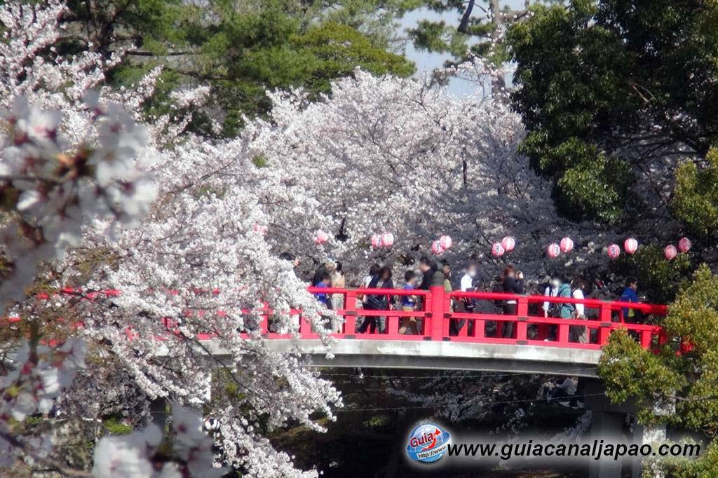 Okazaki Park - A spectacle of the sakura cherry blossoms 14