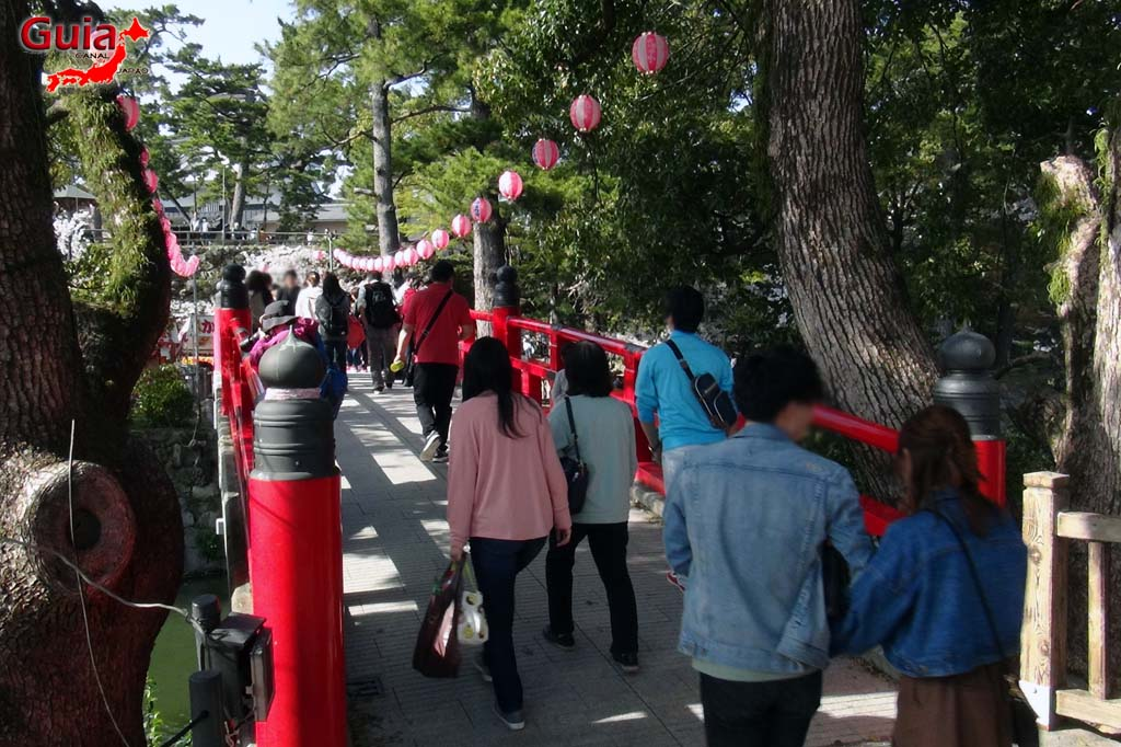 Parque Okazaki - Un espectáculo de los cerezos en flor de sakura 15