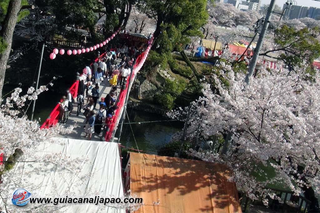 Parque Okazaki - Un espectáculo de los cerezos en flor de sakura 16