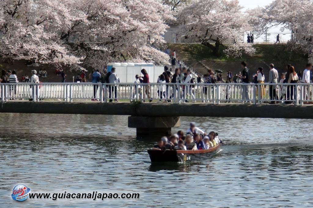 Okazaki Park - A spectacle of the sakura cherry blossoms 18