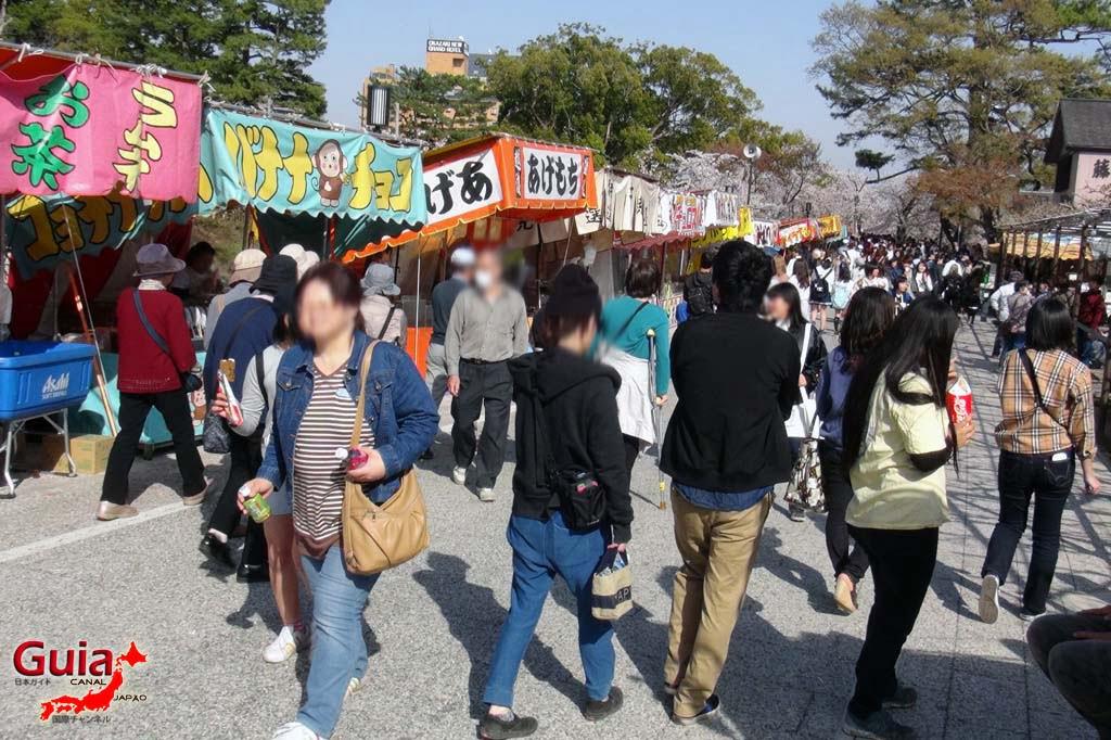 Okazaki Park - A spectacle of the sakura cherry blossoms 20