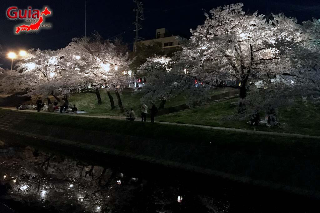 Parque Okazaki - Un espectáculo de los cerezos en flor de sakura 24