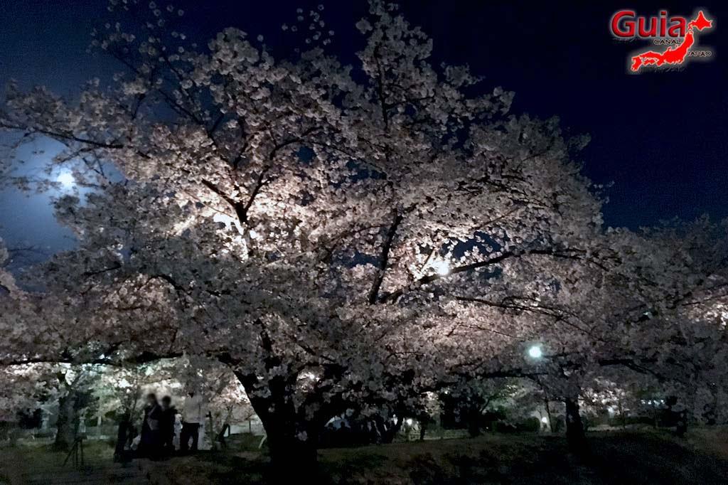 Parque Okazaki - Un espectáculo de los cerezos en flor de sakura 25
