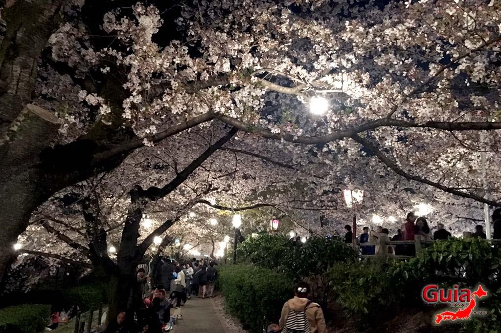 Okazaki Park - A spectacle of the sakura cherry blossoms 26