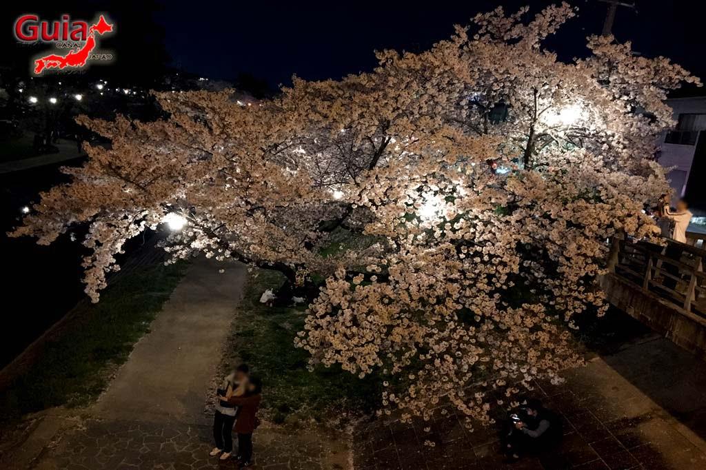 Parque Okazaki - Un espectáculo de los cerezos en flor de sakura 27