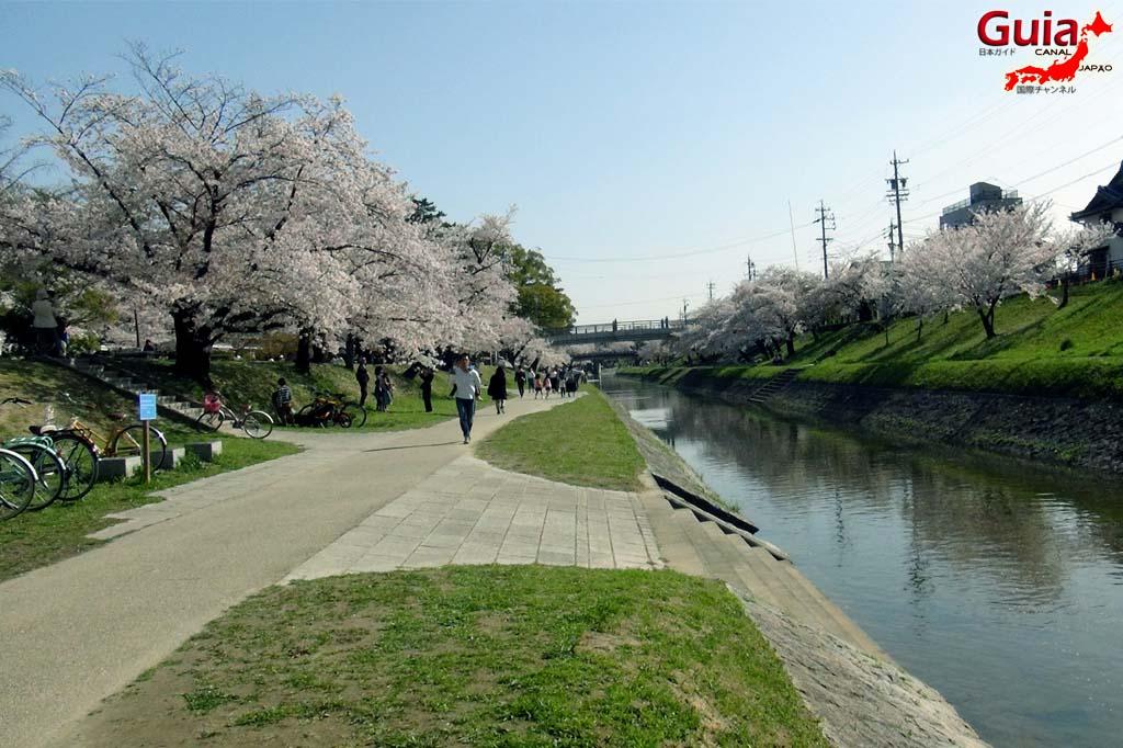 Okazaki Park - A spectacle of the sakura cherry blossoms 4