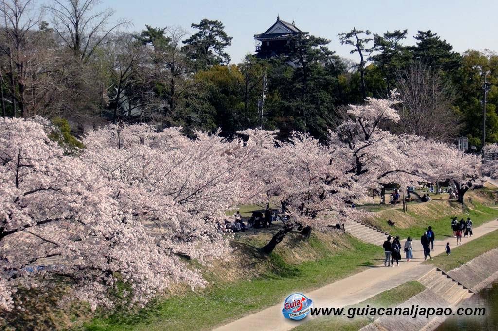 Okazaki Park - A spectacle of the sakura cherry blossoms 6