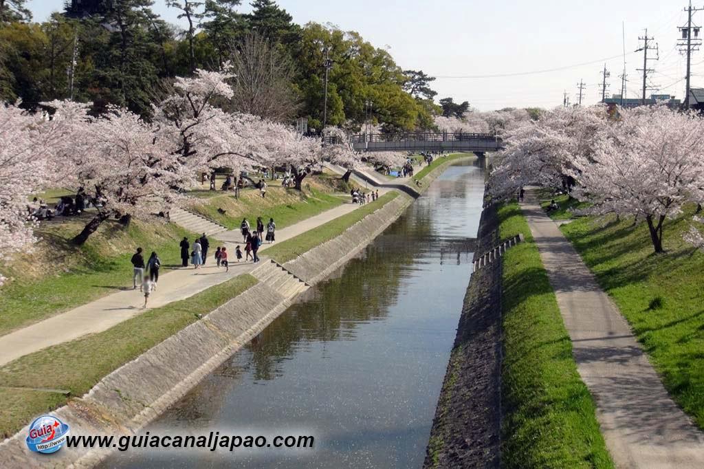 Parque Okazaki - Un espectáculo de los cerezos en flor de sakura 8