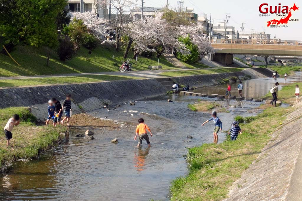 Okazaki Park - A spectacle of the sakura cherry blossoms 9