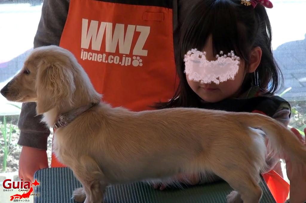 Wanwan Doubutsuen – Zoológico de Cães Okazaki 14
