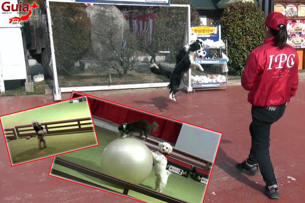 Wanwan Doubutsuen – Zoológico de Cães Okazaki 20