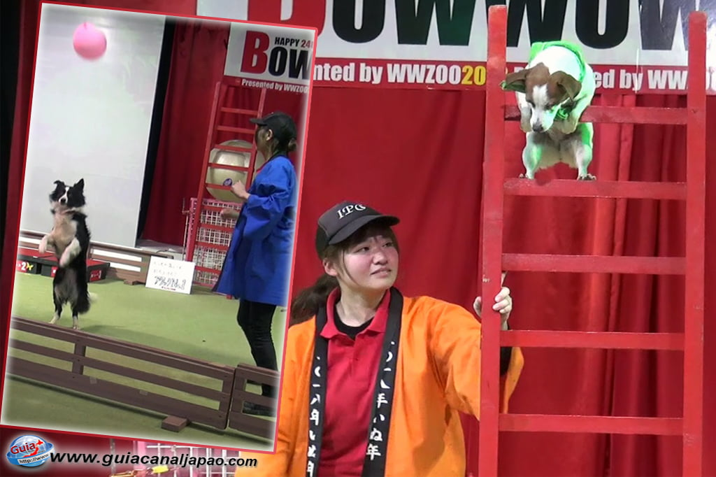 Wanwan Doubutsuen – Zoológico de Cães Okazaki 30