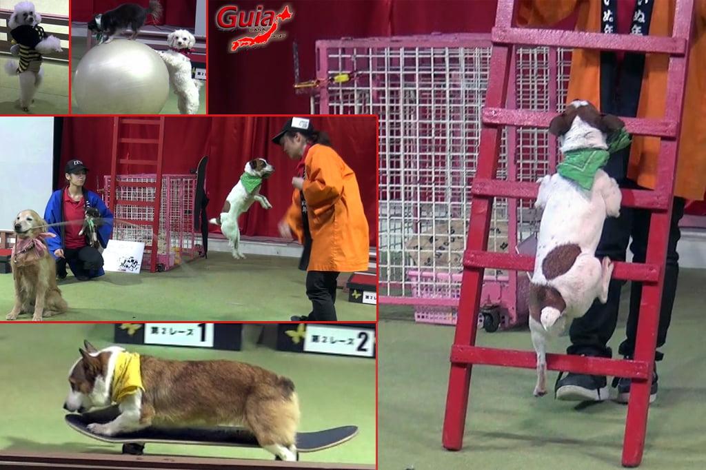 Wanwan Doubutsuen – Zoológico de Cães Okazaki 31