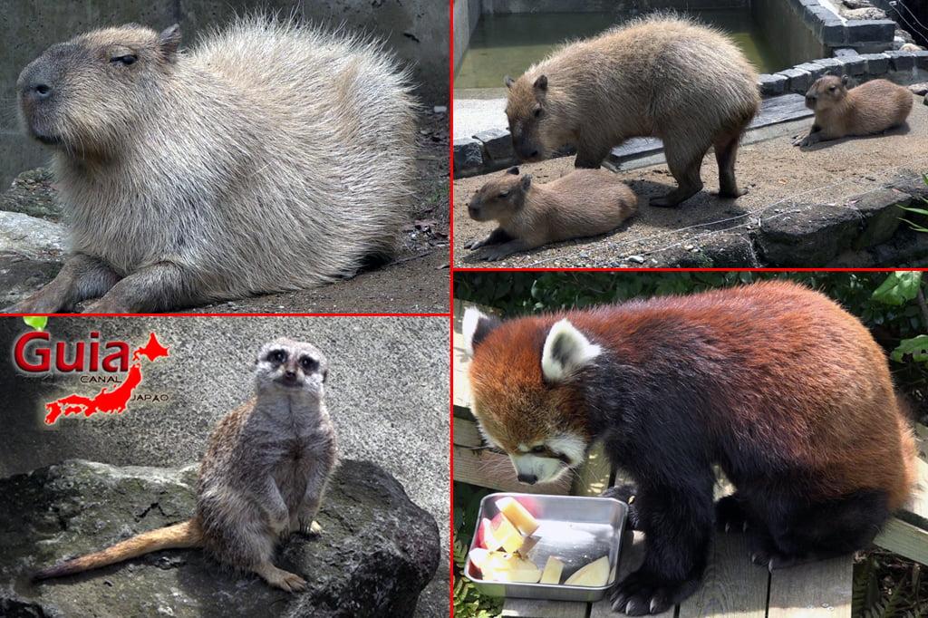 Zoológico Municipal de Hamamatsu 22