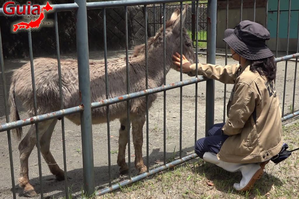 Zoológico Municipal de Hamamatsu 24