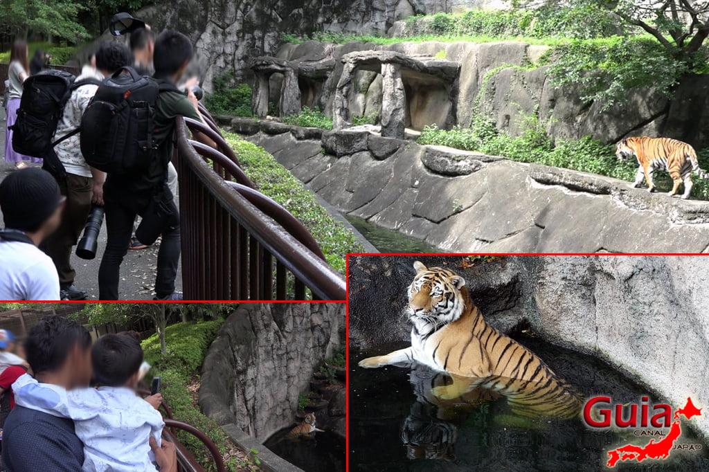 Zoológico Municipal de Hamamatsu 29