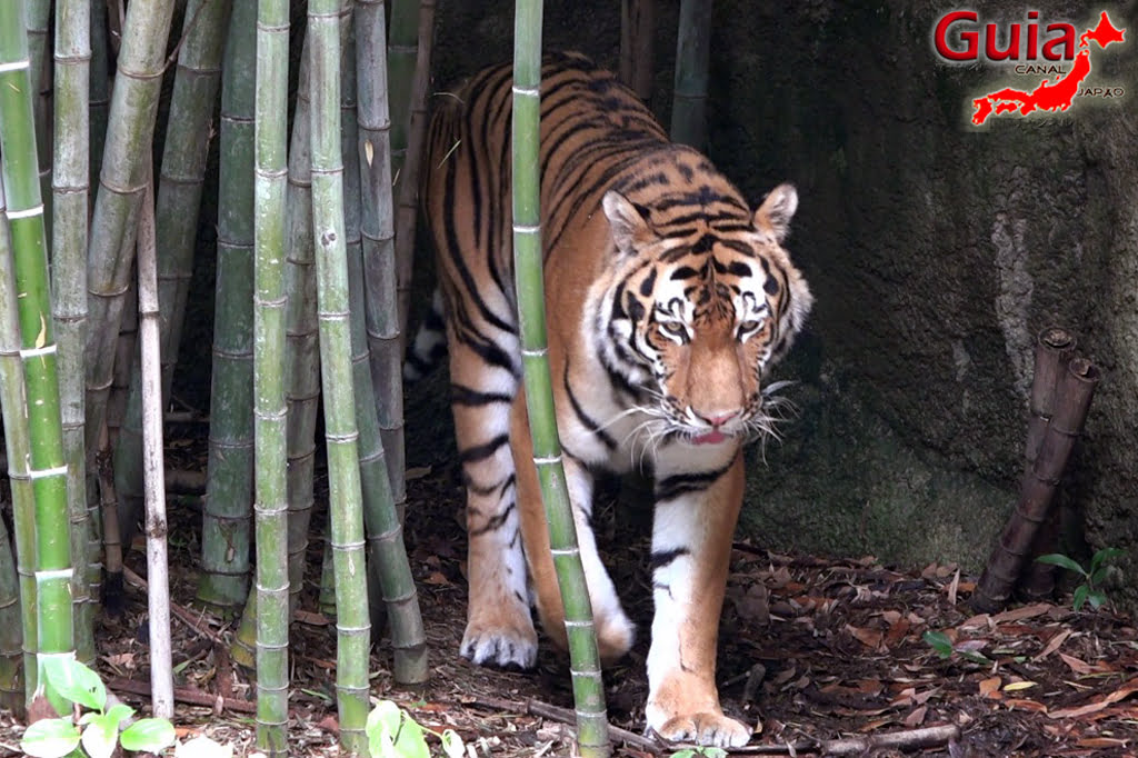 Zoológico Municipal de Hamamatsu 30
